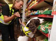 Sniffer dog illicit tobacco